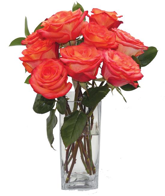Oct - High Rose Orange